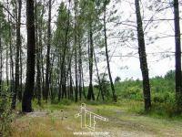 Terreno de Pinhal - Sarnadas - Vila Velha Ródão - REF: 21-11432