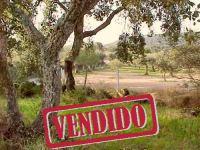 Terreno - Olival - Penamacor - REF: 21-11248